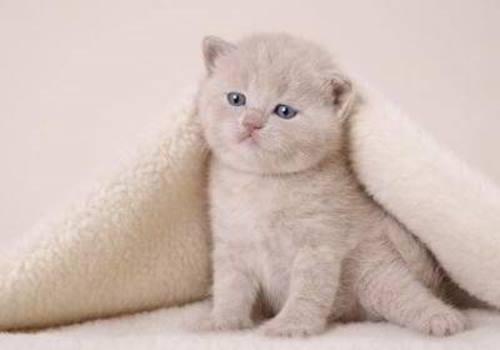 cute_cats_008