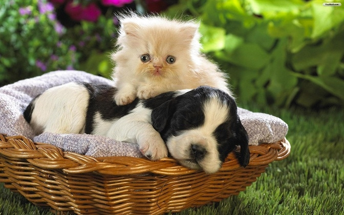 friends_-_dog_and_cat_wallpaper_f608b