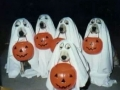 ghostdogs-989d7449cae0ddda015091ee7897a9e748c3d7a4