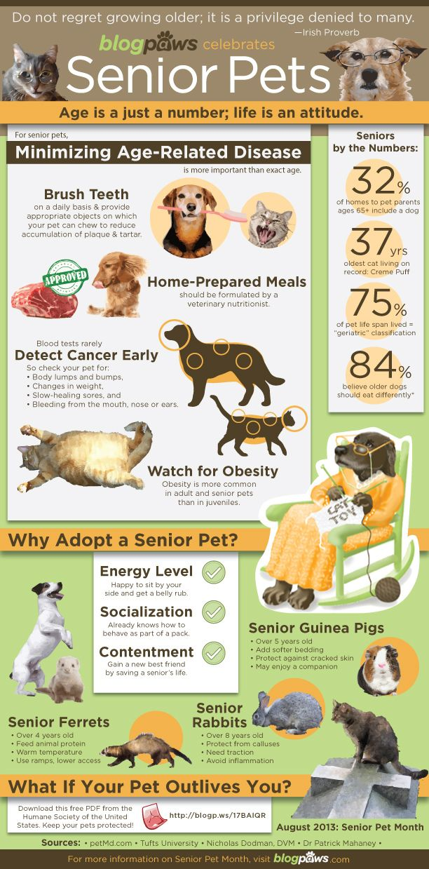 blogpaws_infographic