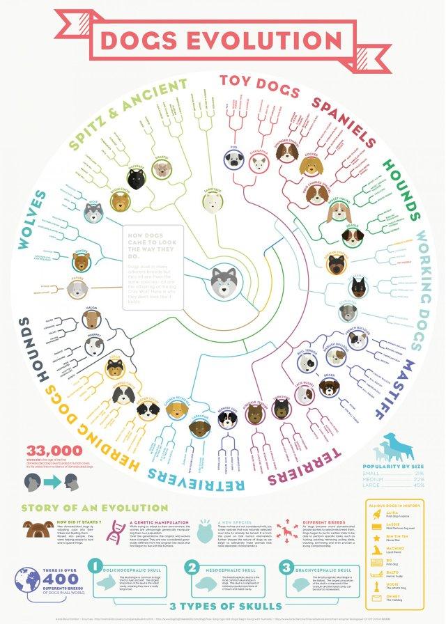 dogs_evolution
