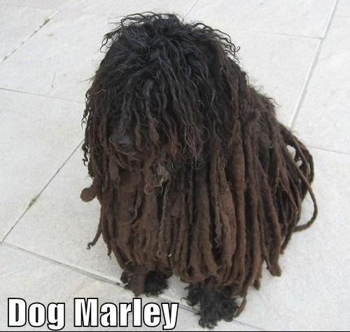 dogmarley