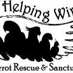 helping-wingrescue