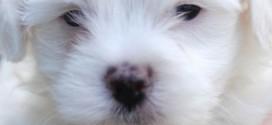 Find Top Pet Insurance Companies