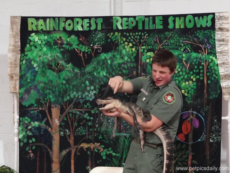 Brendan_Kelly_rainforest_reptiles