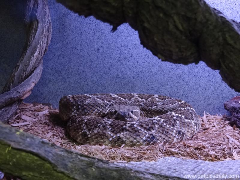 carpet_python