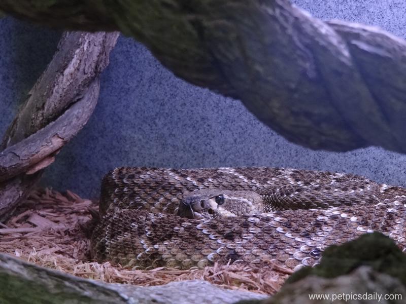 carpet_python_2