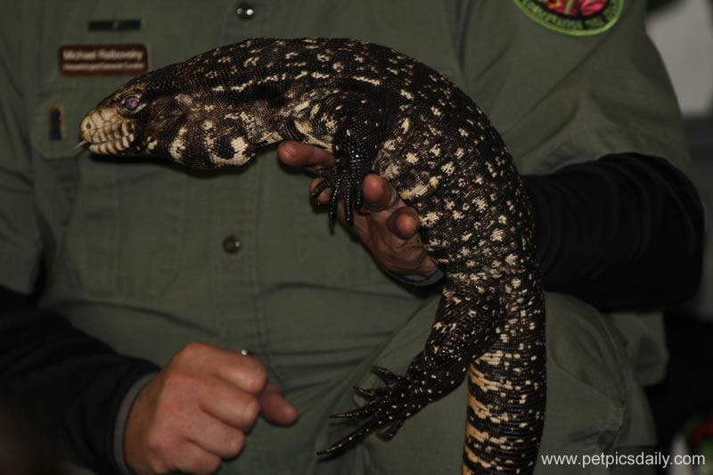 rainforest_reptile_lizard