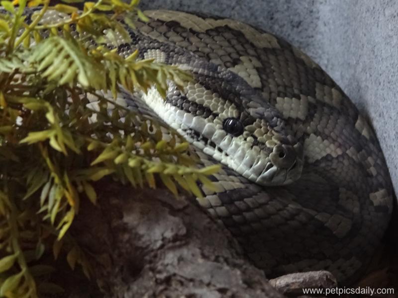 rainforest_reptiles_snake