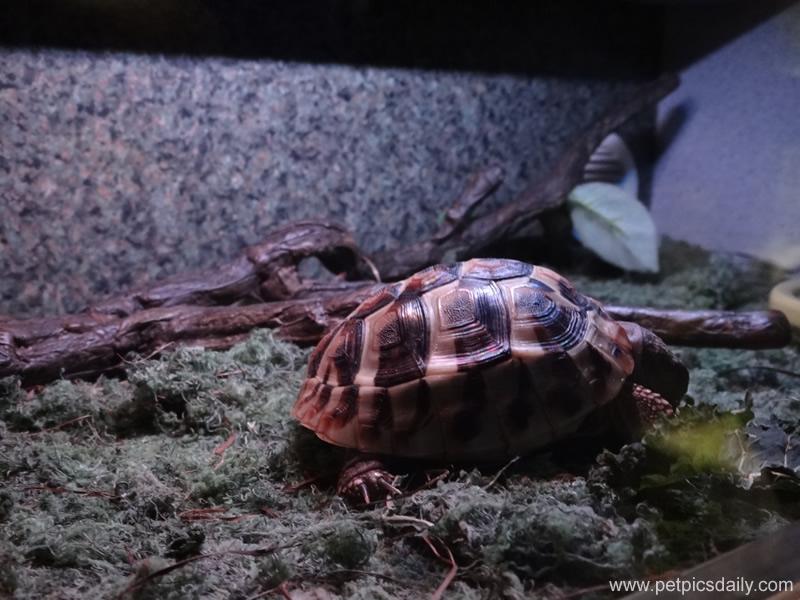rainforest_reptiles_turtle