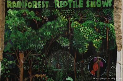 rain_forest_reptile_show