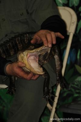 reptiles_3