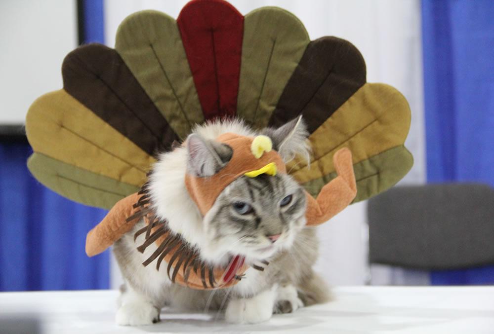Thanksgiving Kitty Cat