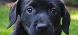 Puppy Amber
